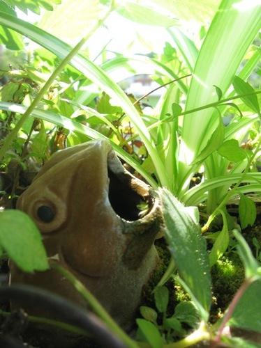 あらら カエルさん 大きなお口ね♪.jpg