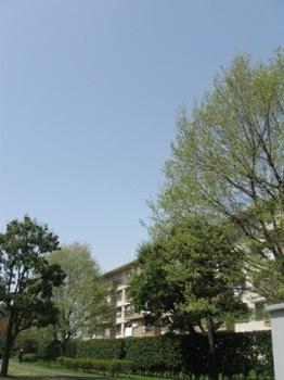 お天気に誘われて歩いてお使いに 緑が綺麗.jpg