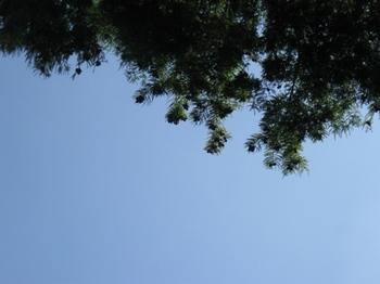 お~い 木の実 たっくさん着いたねぇ~@:@.jpg