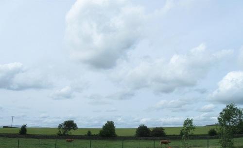 お~い牛さ~ン 湖水地方はそっちかえ~~~?.jpg