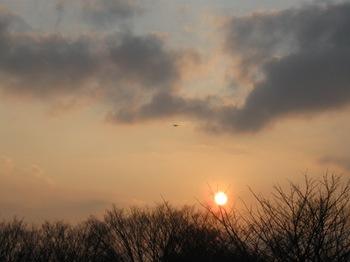 夕日が枝にとまった♪飛行機飛んだ♪.jpg