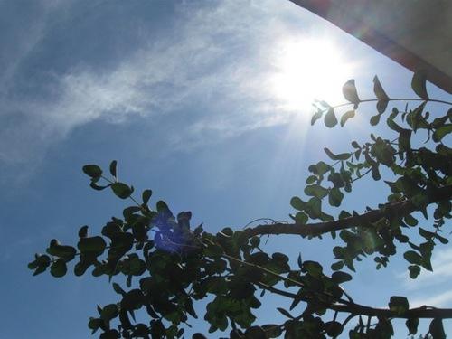 カーテンの隙間から見上げた空。。だめだ 暑すぎる(笑).jpg
