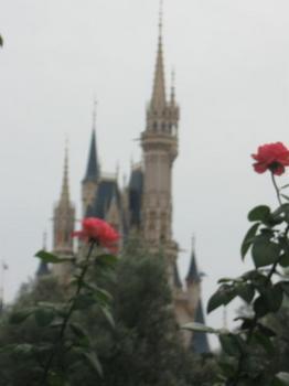 ディズニーランドにはバラが一杯.jpg