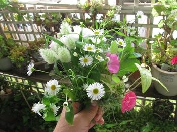 ベランダの花を摘んで・・・♪.jpg