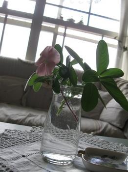 ベランダの花を生けるのが好き.jpg