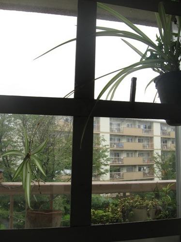 仕事部屋の窓から・・・雨だな~.jpg