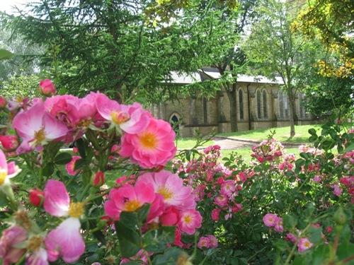 傍には咲き終わりのバラがむせるような香りを放っていました.jpg