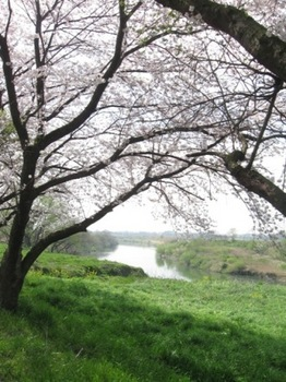 春うらら 大河は流れ 風は渡り 鳥は鳴く.jpg