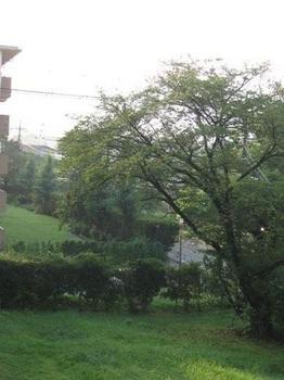 朝 6時20分 朝日が裏の芝生を照らします.jpg
