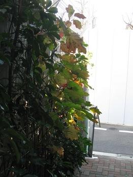 朝日がギャラリーの入口を照らして・・・.jpg
