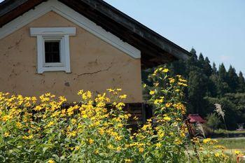 村の土蔵の そばに咲く花.jpg