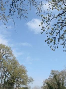 枝の縁取り.jpg