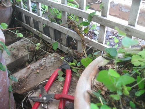 格子の柵の隙間から根が木になったプミラが這い出して行き.jpg