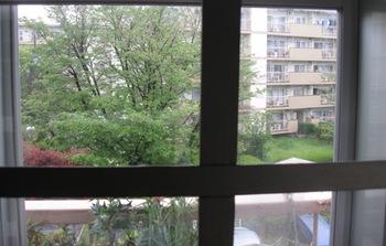 桜が終わって新緑に衣替え.jpg