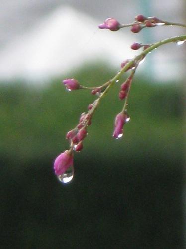 水滴が綺麗.jpg