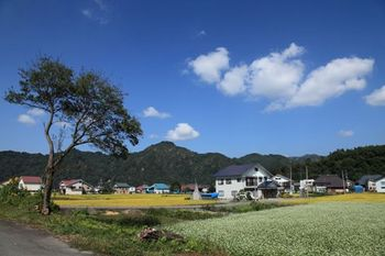 沢口道から 沖村を望む.jpg