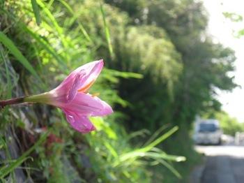 石垣に咲く花.jpg
