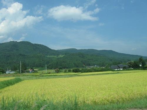 福島は長閑でした♪.jpg