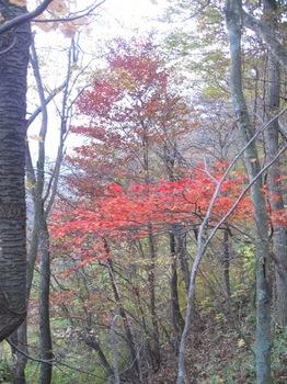 紅葉も赤く色づいて.jpg