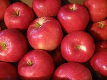 美味しいリンゴが届きました 秋ですね~.jpg