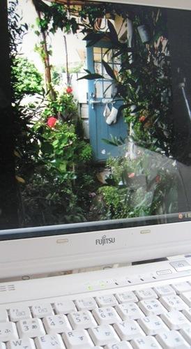 育ち過ぎたベランダの草花.jpg