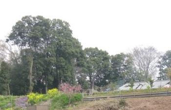 農家の庭 煙る 春の訪れ.jpg