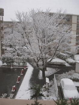 雪です.jpg
