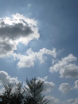 雲が太陽を隠してくれた 途端に涼しくなった。.jpg