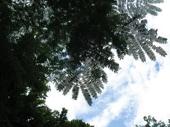 7月暑い中 木陰を探しながらのウオーキング.jpg