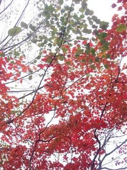 今年もきれいな紅葉と.jpg
