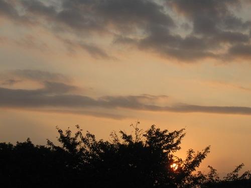 夕焼けこやけのアカトンボ 赤とんぼが飛んでいたんですよ♪.jpg