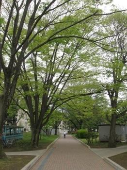 新緑のトンネル おじいちゃんはお散歩かな~♪.jpg
