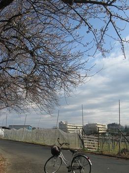 葡萄畑の向こうは子供たちが通った中学校.jpg